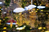 Atlantic salmon, Salmo salar<br /> River Orkla, Rennebu, Norway<br /> Model name: -