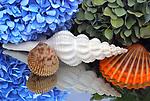 Hydrangea & Shells DSC2829