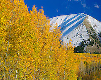 Aspen groves and moon below the La Sal Mountains; La Sal Mountains, UT