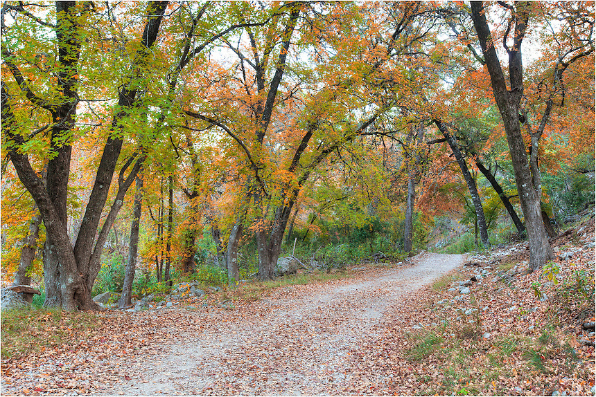 Exploring Lost Maples State Park is a lot of fun. Here, a canopy of color leads the way on a crisp November day in the Hill Country near Vanderpool, Texas.
