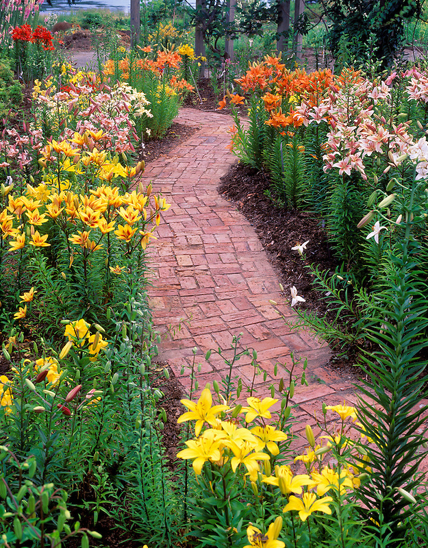 Multi-colored lilies and brick path. Horticultural Centre of the Pacific. British Columbia, Canada