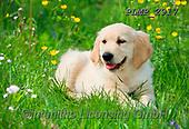 Marek, ANIMALS, REALISTISCHE TIERE, ANIMALES REALISTICOS, dogs, photos+++++,PLMP2917,#a#, EVERYDAY