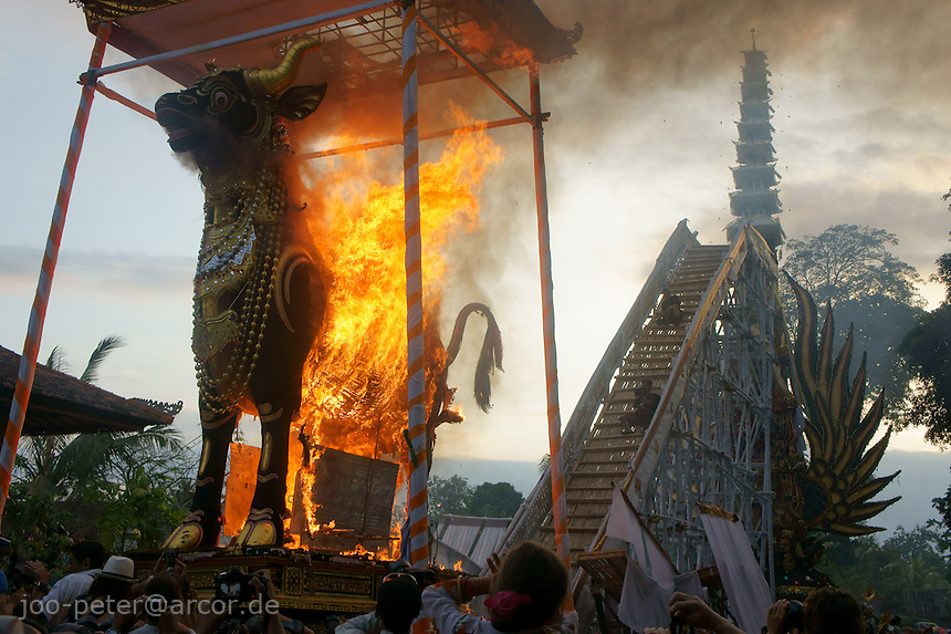 Huge black bull (Lemu) burning with reminders of the passed family member in cremation ceremonies of a royal family member, August 2011, Ubud, Bali, archipelago Indonesia. Bull sarcophagi are  used by Brahman cast, also the tower-like sarcophagus  with roofs like of a pagode, which is called bade or wadha