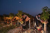 Europe/Europe/France/Midi-Pyrénées/46/Lot/Vire-sur-Lot: Clos Triguedina - Jean-Luc et Sabine  Baldès lors des Vendanges du Vin de Lune - Vin de Lune- Le moelleux du Clos Vin de Pays du Comté Tolosan - Cépage Chenin<br /> Souvenir du  XVII qand les paysans vendangeaient la nuit  pour soustraire une partie de la récolte au seigneur. [Non destiné à un usage publicitaire - Not intended for an advertising use]