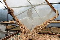KENYA, County Bungoma, village Kimwanga, sweet potato processing, drying unit, the chips will be later processed to flour for baking / KENIA, Suesskartoffel Verabeitung bei NGO CREADIS, Trocknung der Raspeln die spaeter zu Mehl zum Backen verarbeitet werden