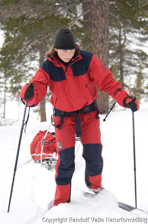 Jente trekker pulk i furuskog i Femundsmarka ---- Girl pulling sled among pines