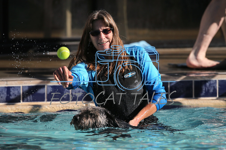 Dawn Johnson plays with her paraplegic dog Nieko at the 10th annual Pooch Plunge at the Carson City Aquatics Center, in Carson City, Nev., on Saturday, Sept. 22, 2018. The event is a fundraiser for the Carson Animal Services Initiative which supports Nevada Humane Society services in Carson City.<br /> Photo by Cathleen Allison/Nevada Momentum