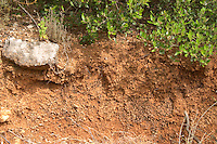 A cross section of the soil, said to be similar to Burgundy (or did he mean Bordeaux?) soil. Domaine du Mas de Daumas Gassac. in Aniane. Languedoc. Terroir soil. France. Europe. Vineyard. Sand.