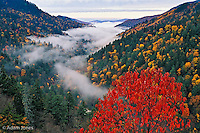 Autumn view of fog from Morton Overlook,<br /> Great Smoky Mountains National Park, TN