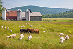 A farm in Athens, VT, USA