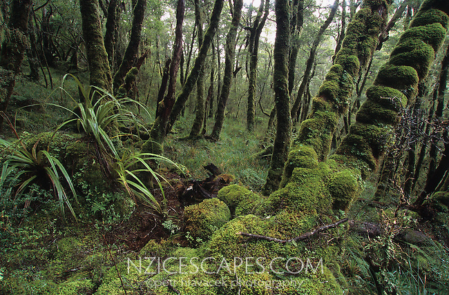 Moss cloaked boulders and trees near a Gouland Downs Hut on the Heaphy Track - Kahurangi National Park
