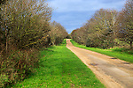 Long straight unsurfaced country road in winter sunshine, Sutton, Suffolk, England, UK