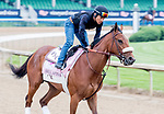 LOUISVILLE, KENTUCKY - APRIL 30: Bellafina, trained by Simon Callaghan, exercises in preparation for the Kentucky Oaks at Churchill Downs in Louisville, Kentucky on April 30, 2019. Scott Serio/Eclipse Sportswire/CSM