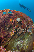 A female diver investigating the cockpit of a B-25 Mitchell Bomber plane wreck, Madang, Pacific Ocean, Papua New Guinea (MR), MR