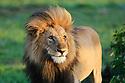 OL Seki Masai Mara Kenya