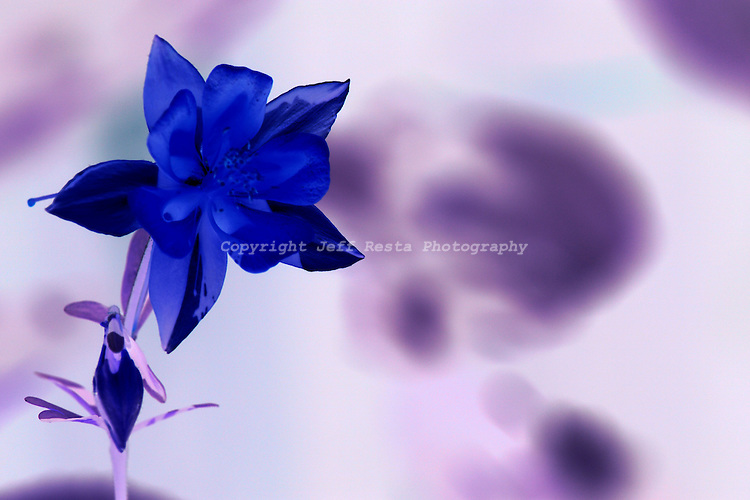 Digitally enhanced photography