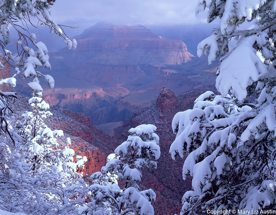 Grand Canyon National Park, AZ<br /> Snow laden trees frame a view of the Grand Canyon near the Bright Angel trail head on the south rim