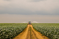 &quot;Irrigation&quot;<br /> Potato Field<br /> Riverhead, Long Island