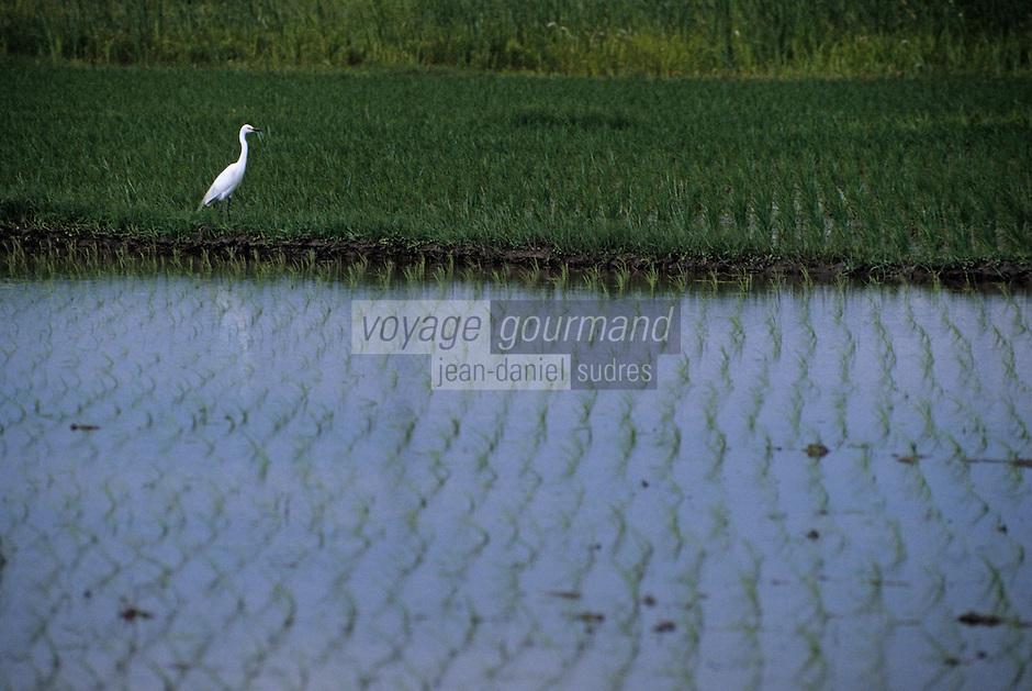 Asie/Japon/Tokyo: Détail d'un oiseau devant des rizières