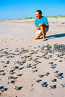 sea turtle researcher / conservationist, Dr. Rene Marquez, observes release of Kemp's ridley sea turtle hatchlings, Lepidochelys kempii, Rancho Nuevo, Mexico, Gulf of Mexico, Caribbean Sea, Atlantic Ocean