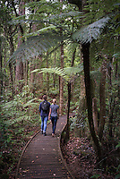 Tourists in Waipoua Kauri Forest, Northland Region, North Island, New Zealand