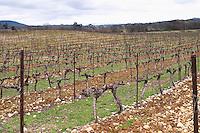 View over the vineyard at Domaine de Triennes Cordon Royat training Grape variety Cabernet Sauvignon Domaine de Triennes Nans-les-Pins Var Cote d'Azur France