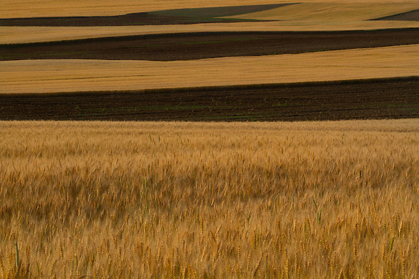 Wheat fields in eastern, Colorado .  John offers private photo tours and workshops throughout Colorado. Year-round.