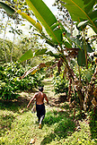 BELIZE, Punta Gorda, Village of San Pedro Colombia, Eladio Pop walks through his Agouti Cacao Farm