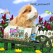 Xavier, ANIMALS, REALISTISCHE TIERE, ANIMALES REALISTICOS, photos+++++,SPCHGUINEA97,#A#, EVERYDAY ,funny