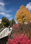 0910-57 111.CR2..GCS Fall Campus color.Photography by Mark A. Philbrick..Copyright BYU Photo 2009.All Rights Reserved.photo@byu.edu  (801)422-7322