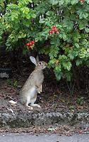 25/08/2011 City Rabbit