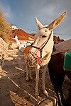 A white donkey awaits a rider to take up the steps to the village of Oia from the harbor town at Ammoudhi Bay, Santorini (Thira), Greece