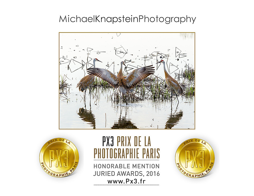 """Crane Dance"" by Michael Knapstein was named the Honorable Mention winner in the Prix de la Photographie Paris (PX3)international photography competition in Paris, France."