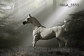 Bob, ANIMALS, REALISTISCHE TIERE, ANIMALES REALISTICOS, collage, horses, photos+++++,GBLA3559,#a#