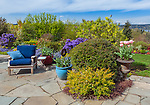 Vashon-Maury Island, WA: Flagstone patio with blue chair and colorful pots of tulips with perennial gardens