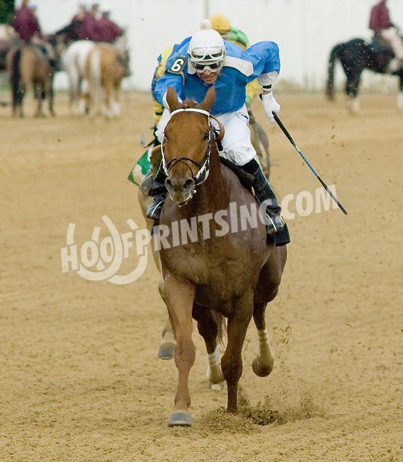 Sombreado winning. at Delaware Park on 10/27/12..