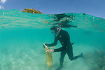 Chris Glasby snorkels down to collect sand which may contain polychaete worms.