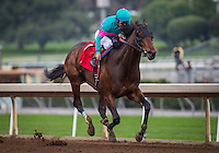 ARCADIA, CA - FEBRUARY 04: Royal Mo #1, ridden by Victor Espinoza is uncontested in the Robert B. Lewis Memorial Stakes at Santa Anita Park on February 4, 2017 in Arcadia, California. (Photo by Zoe Metz/Eclipse Sportswire/Getty Images)