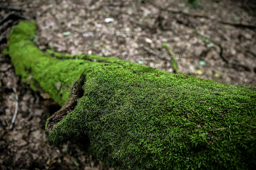 Foresta di Bialowieza