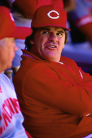 SAN FRANCISCO, CA - Manager Pete Rose of the Cincinnati Reds watches the game from the dugout during a game against the San Francisco Giants at Candlestick Park in San Francisco, California on June 18, 1987. Photo by Brad Mangin