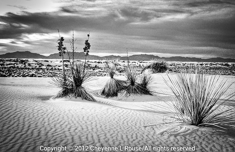 White Sands - New Mexico (BW)<br />