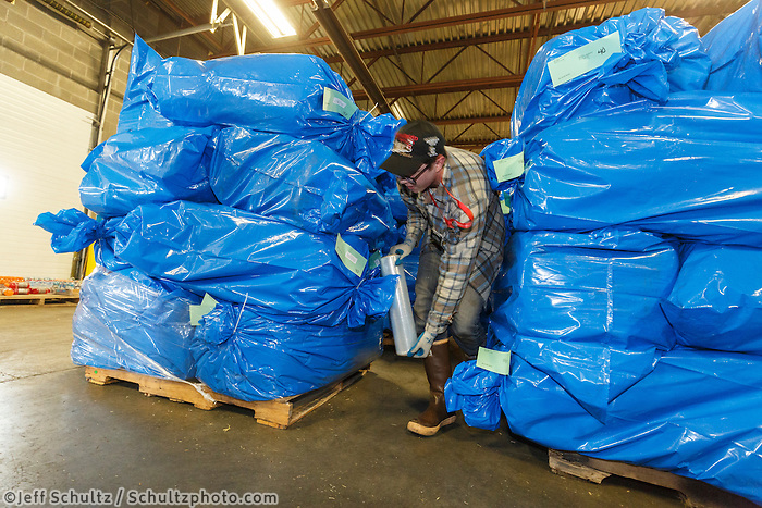Getting ready for Iditarod 2016, volunteer, Elder Gehring shrink-wraps a pallet of straw as others bag, zip-tie and stack  straw and hay on Thursday, February 11, 2016  at Airland Transport in Anchorage. Nearly 1700 bales will be sent out to over 20 checkpoints along the trail. Iditarod 2016