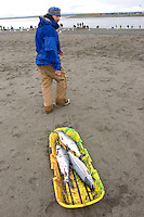 "Joey Schmidt, of Anchorage, Alaska, pulls a child's wintertime sled full of sockeye salmon across the beach at the mouth of the Kenai River in Kenai, Alaska. Schmidt said he grew up in Alaska but it was his first time dipnet fishing. The fishery, open to Alaskan residents only, is designated a ""personal use"" fishery and is designed to help Alaskans fill freezers and canning jars with fish."