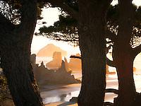 Tree and beach at sunset. Bandon, Oregon