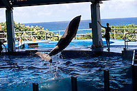 Dolphins held in captivity for the entertainment industry at Sea Life Park in Waimanalo, HI. in 2014. (photo ô Karen Ducey)
