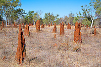 Termite Mounds near Elsey Nat Park, NT, Australia