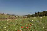 Israel, Emek Hashalom (Peace valley) in Menashe Heights