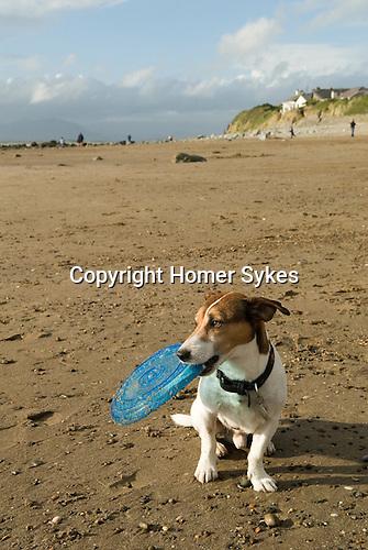 Brendan Llanfair beach west Wales 2013