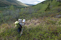 June 4, 2012, Lacy Karpilo searching for a historic photo location near the former site of Fannie Quigley's Cabin, Kantishna, Denali National Park and Preserve, Alaska. Photo by Ron Karpilo.