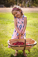 4 year old girl smiling with a basket of raspberries, New Zealand - stock photo, canvas, fine art print